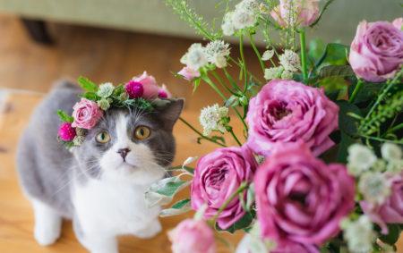 2月22日は猫の日🐈